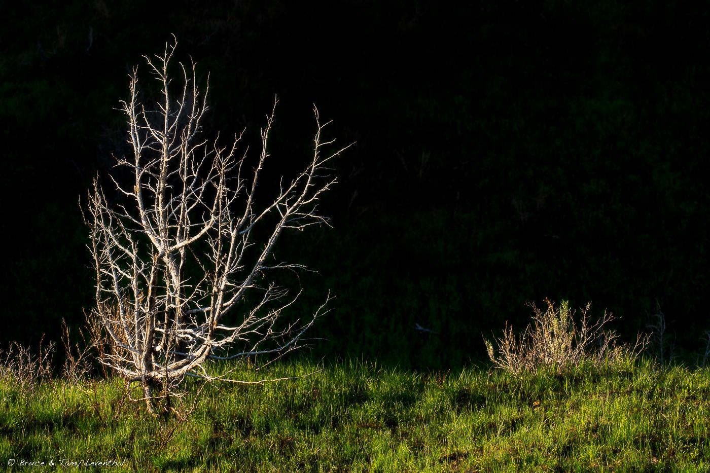 TreeBones_LEV4962-Edit.jpg