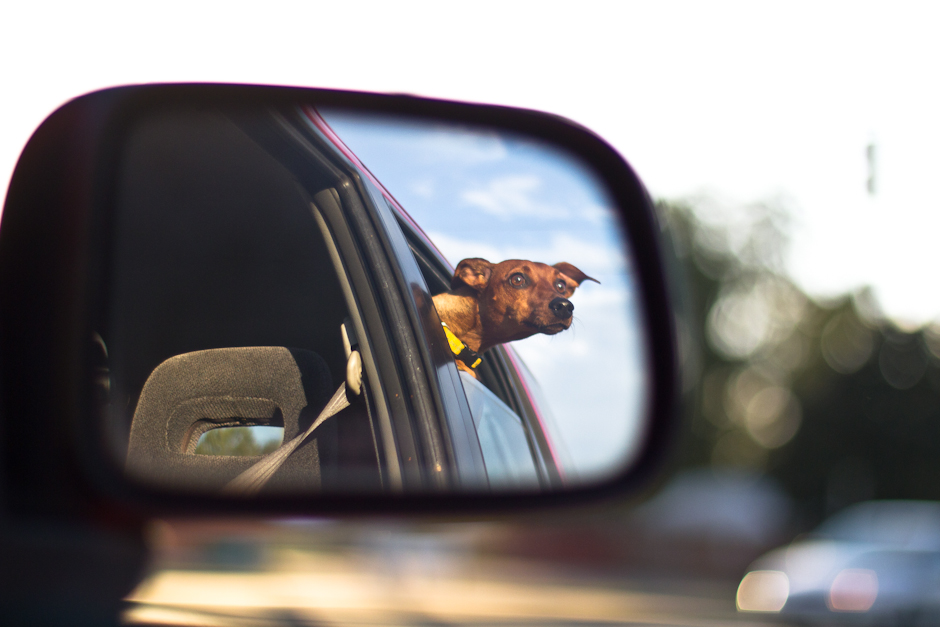 dog hanging head out window, reflection