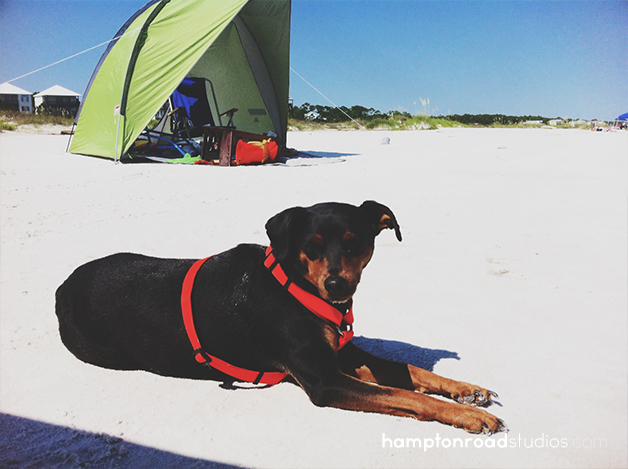 iphone sam falling asleep on beach