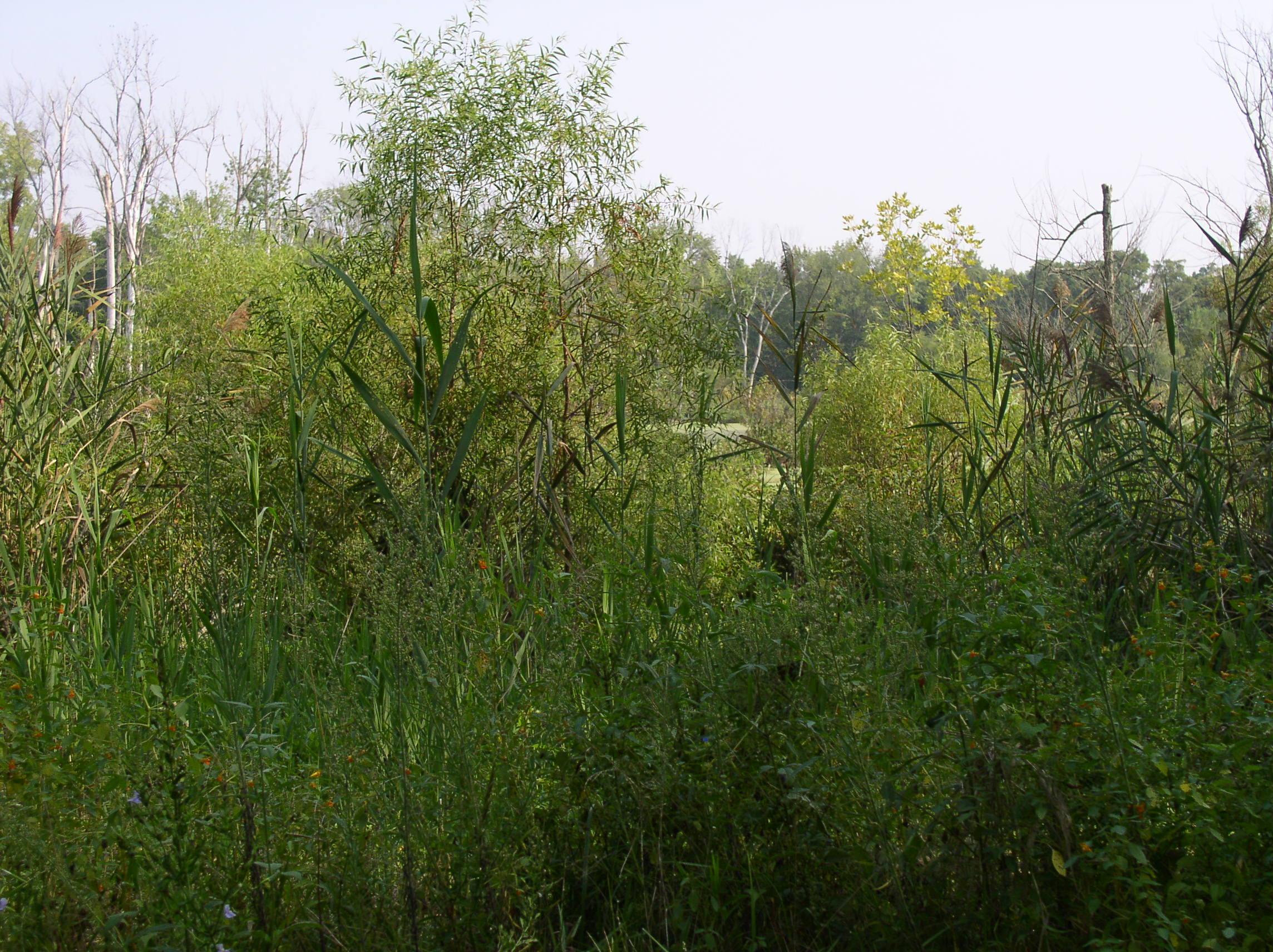 2007 conservation practises 007.jpg