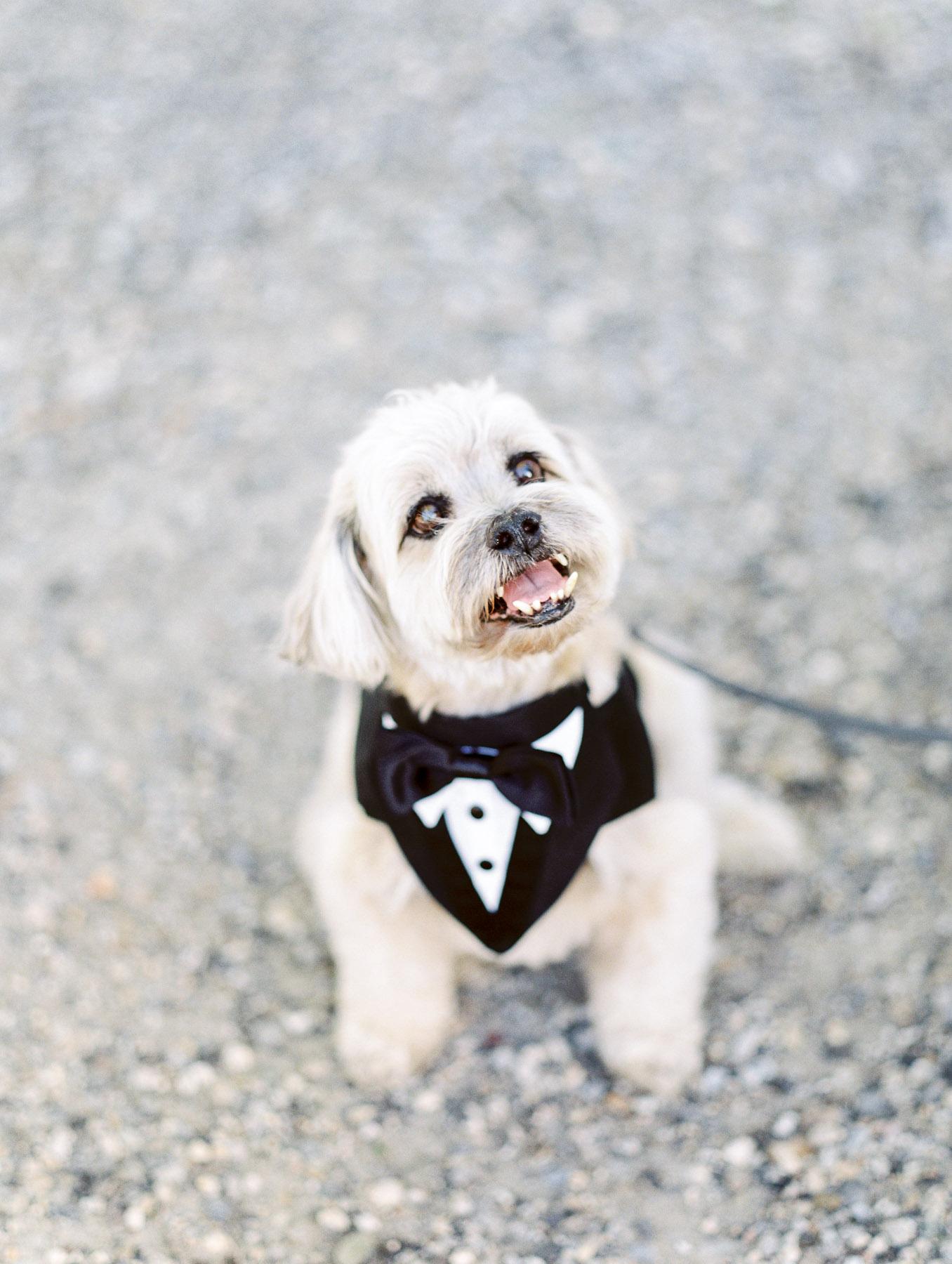 Manchester Vermont Wedding Dog in Tux