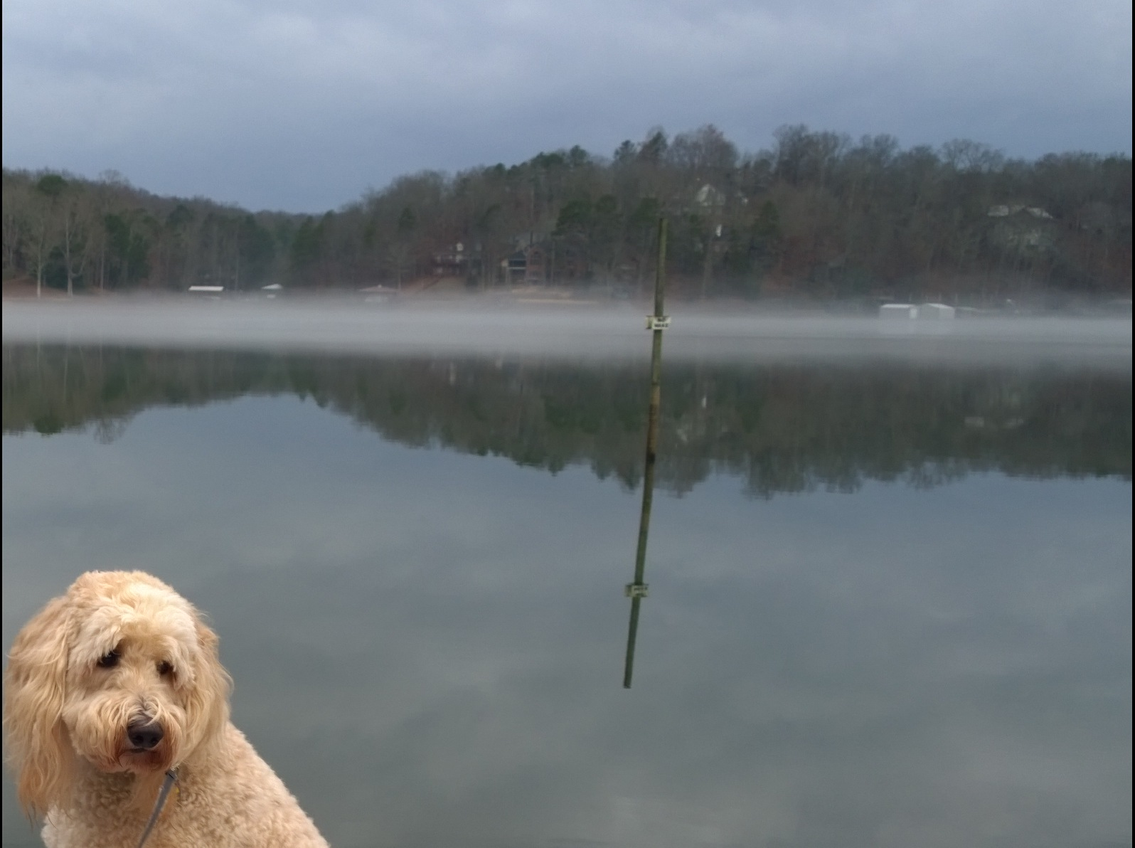 Kramer at the Lake.jpg