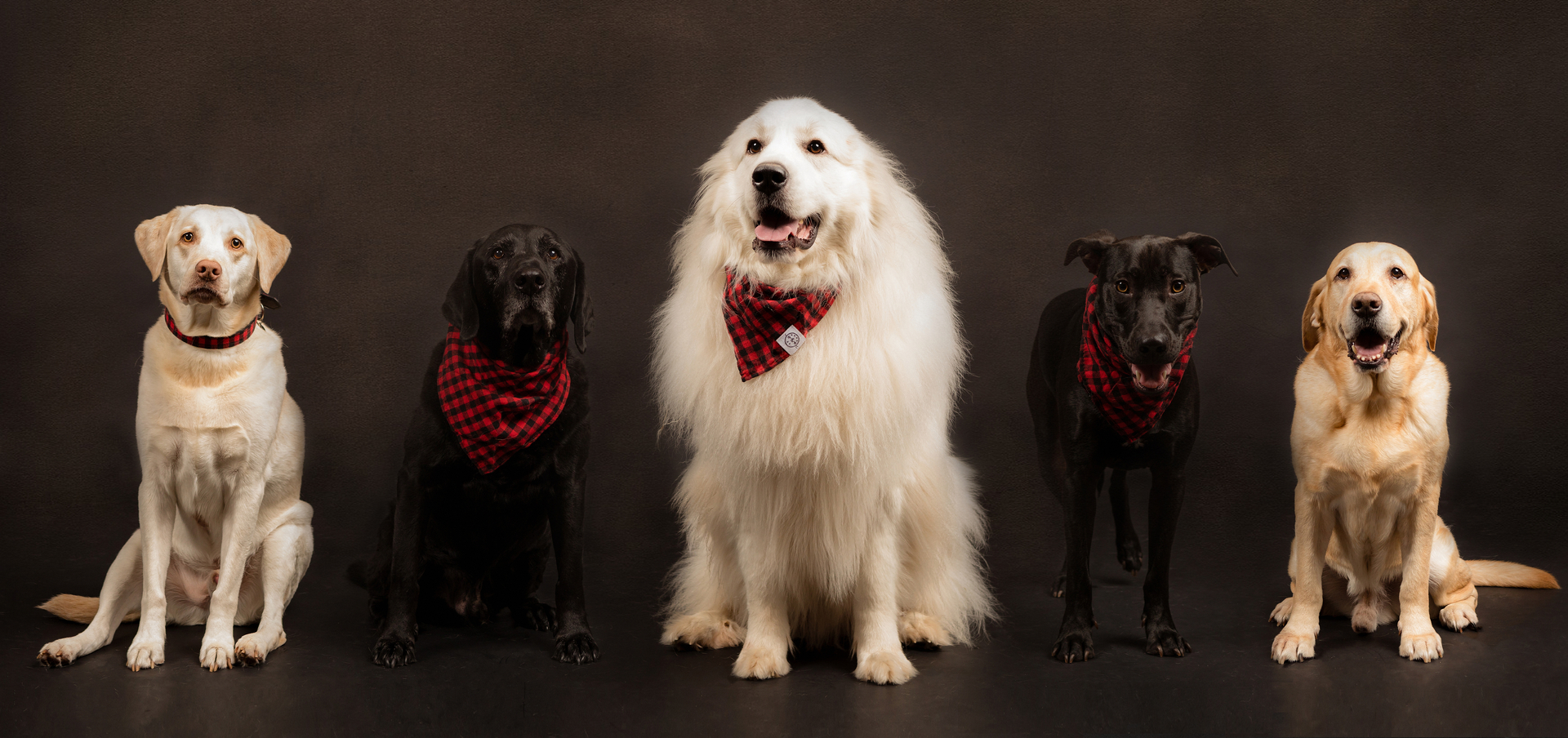PETS & FURKIDS - Celebrate the life you share with your adorable furkids
