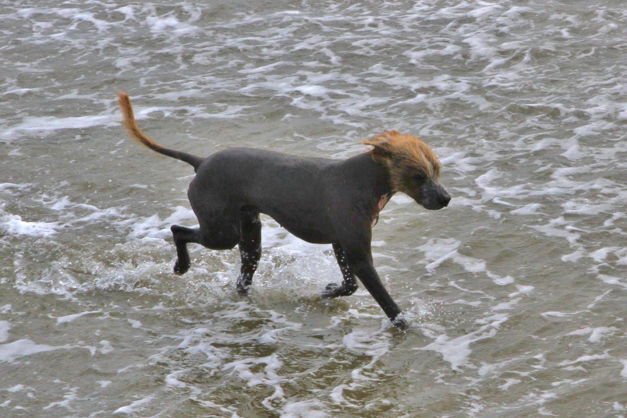 Even seen a Peruvian Hairless Dog?