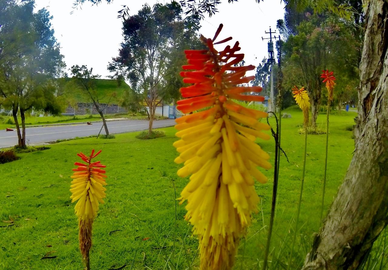Parque Metropolitano, Quito