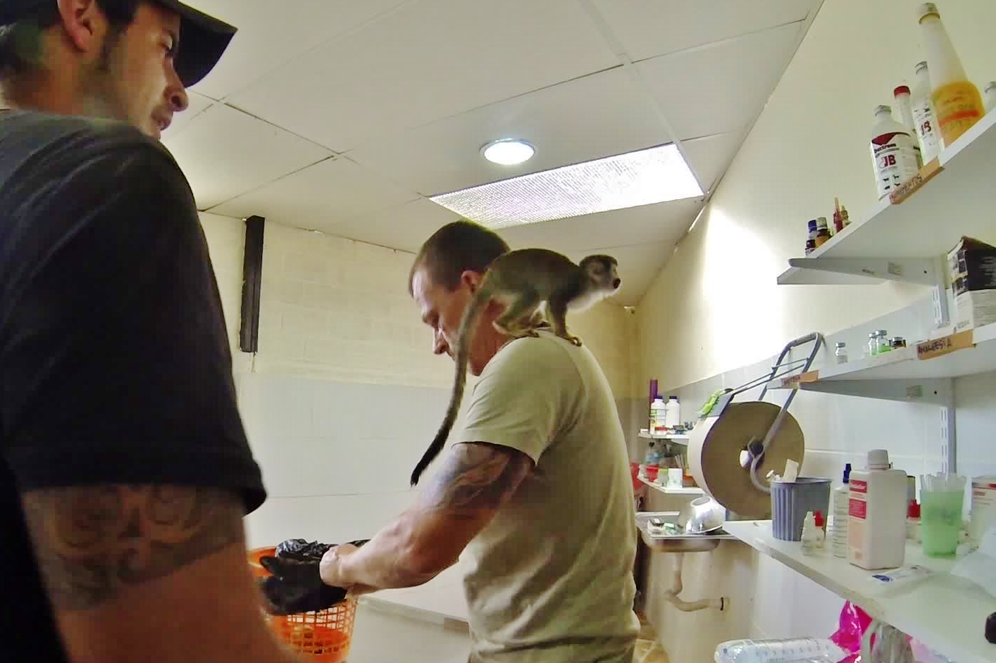 Tore preps parasite medication for a young Squirrel Monkey in the vet clinic
