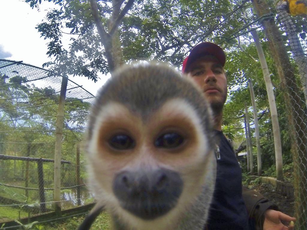 Squirrel Monkey p-bomb