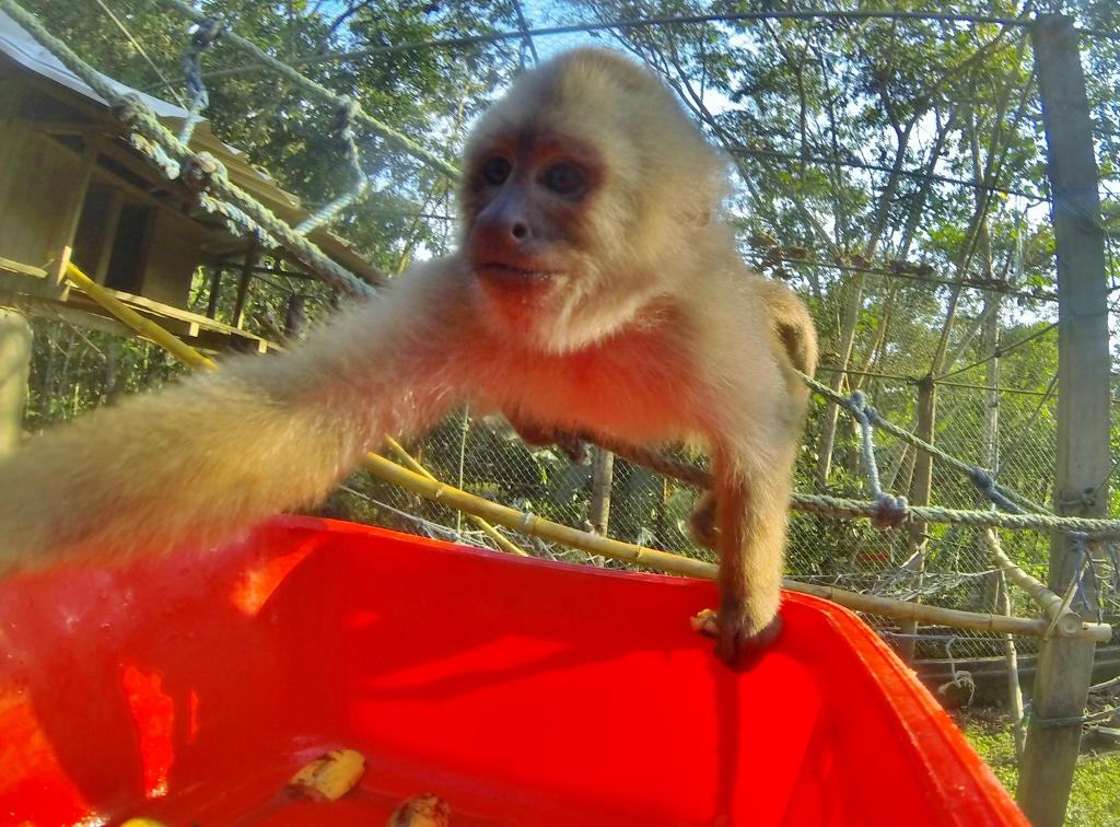 Carlitos the Capuchin Monkey was a true bro