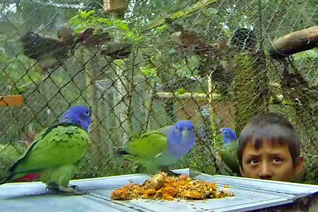José helps feed the parrots