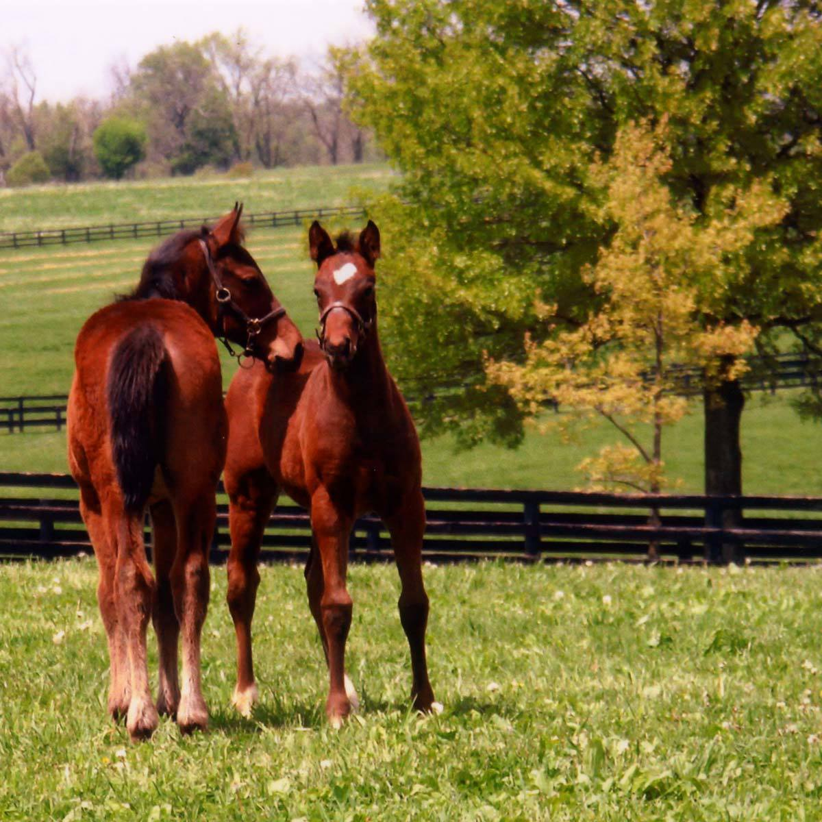 foals-in-spring.jpg