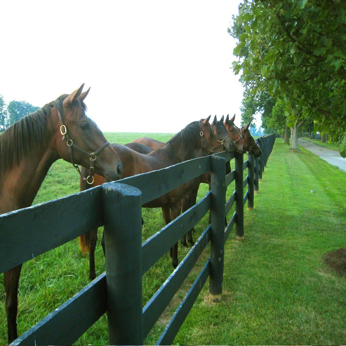 horses-at-fence.jpg