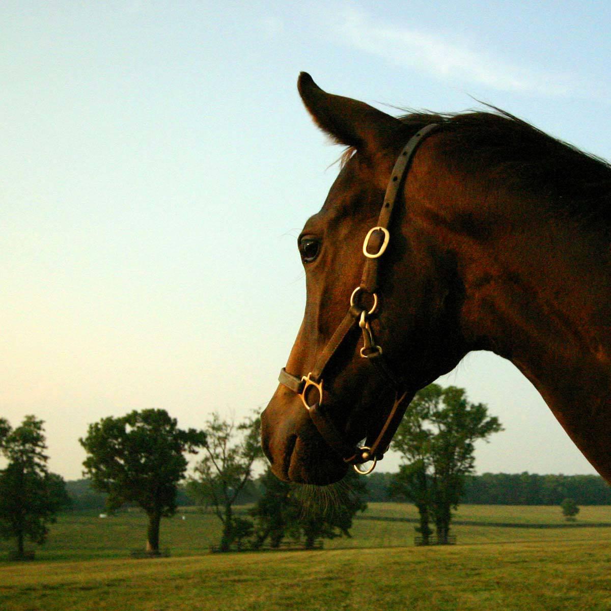 solo-horse1.jpg