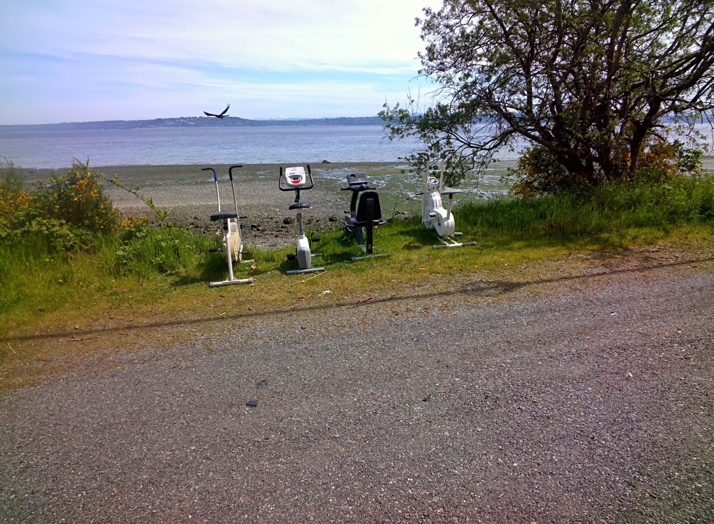 the famous exercise bikes on Vashon a must do EVERY time you ride here.