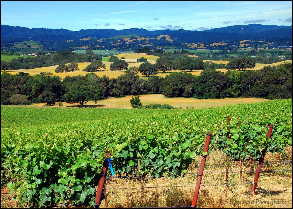 blanchard family wines.jpeg