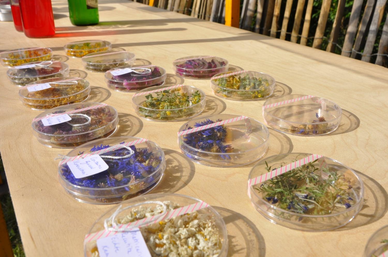 Het onkruid wat in de omgeving van de Westerkeijn groeide, verwerkt tot gedroogde thee