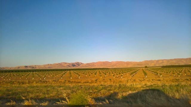 Orange trees and mountains #California #roadtrip #roadtripradio