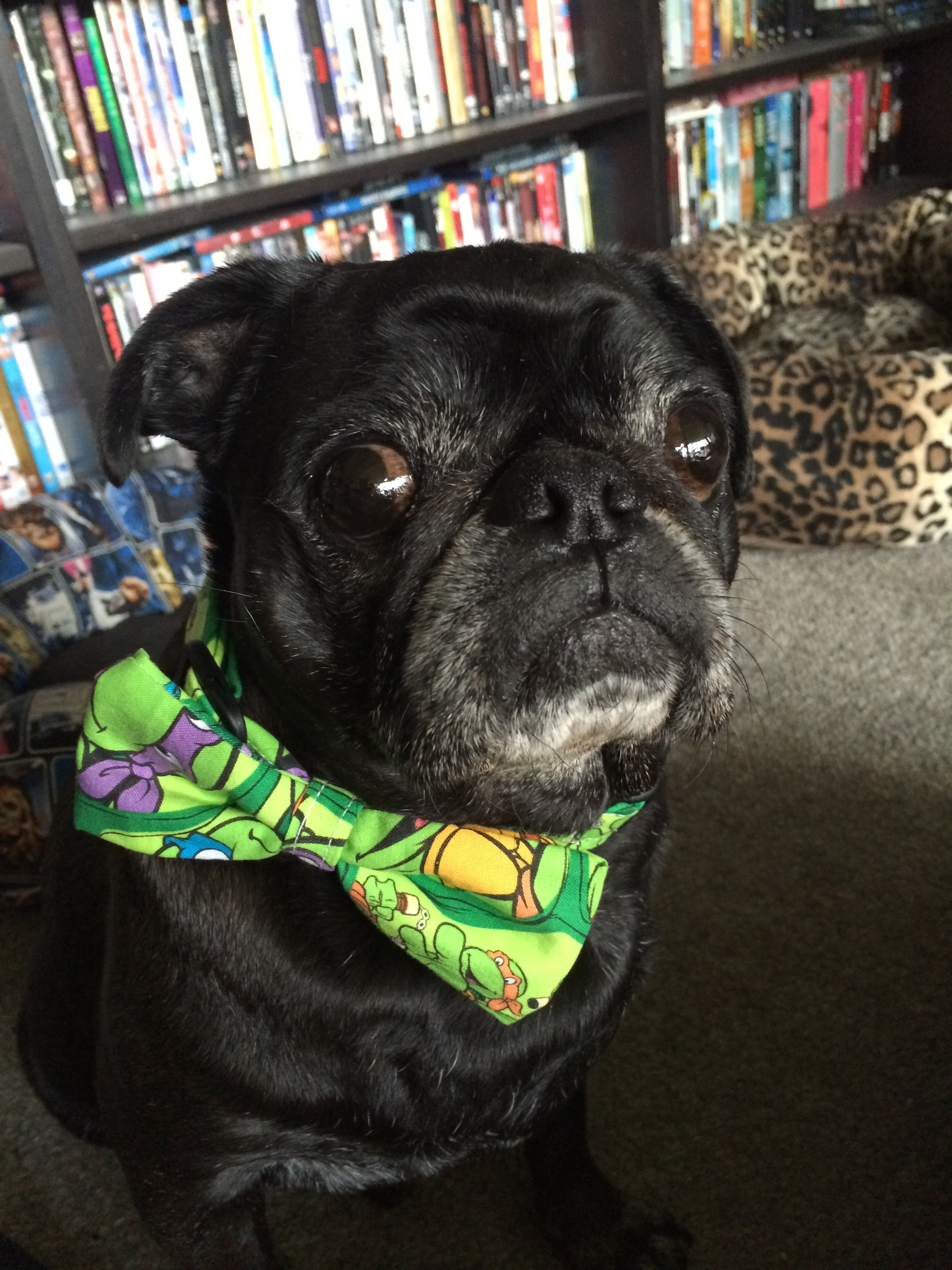 TMNT bowtie, a must for every geeky dog!