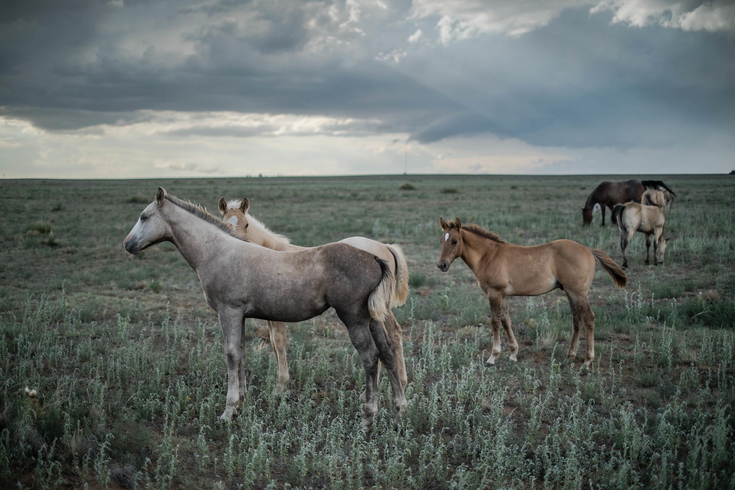 Union County, New Mexico