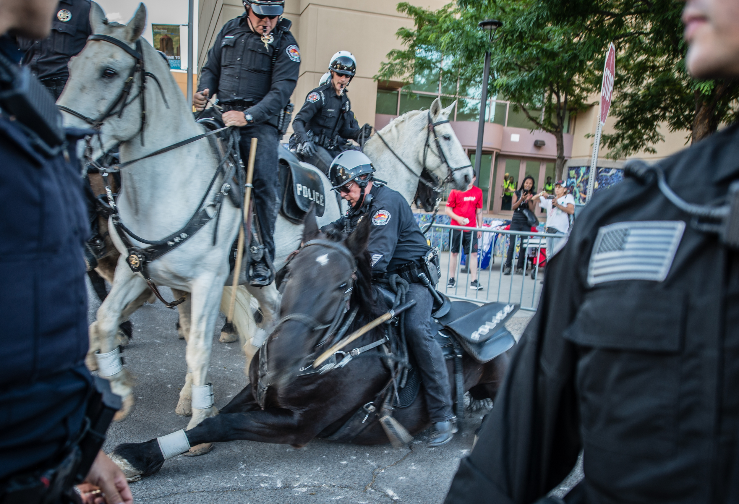 A mounted patrolman's horse takes a tumble when protesters breached a barricade during an anti Donald Trump rally demonstration in Albuquerque on May 24th, 2016.