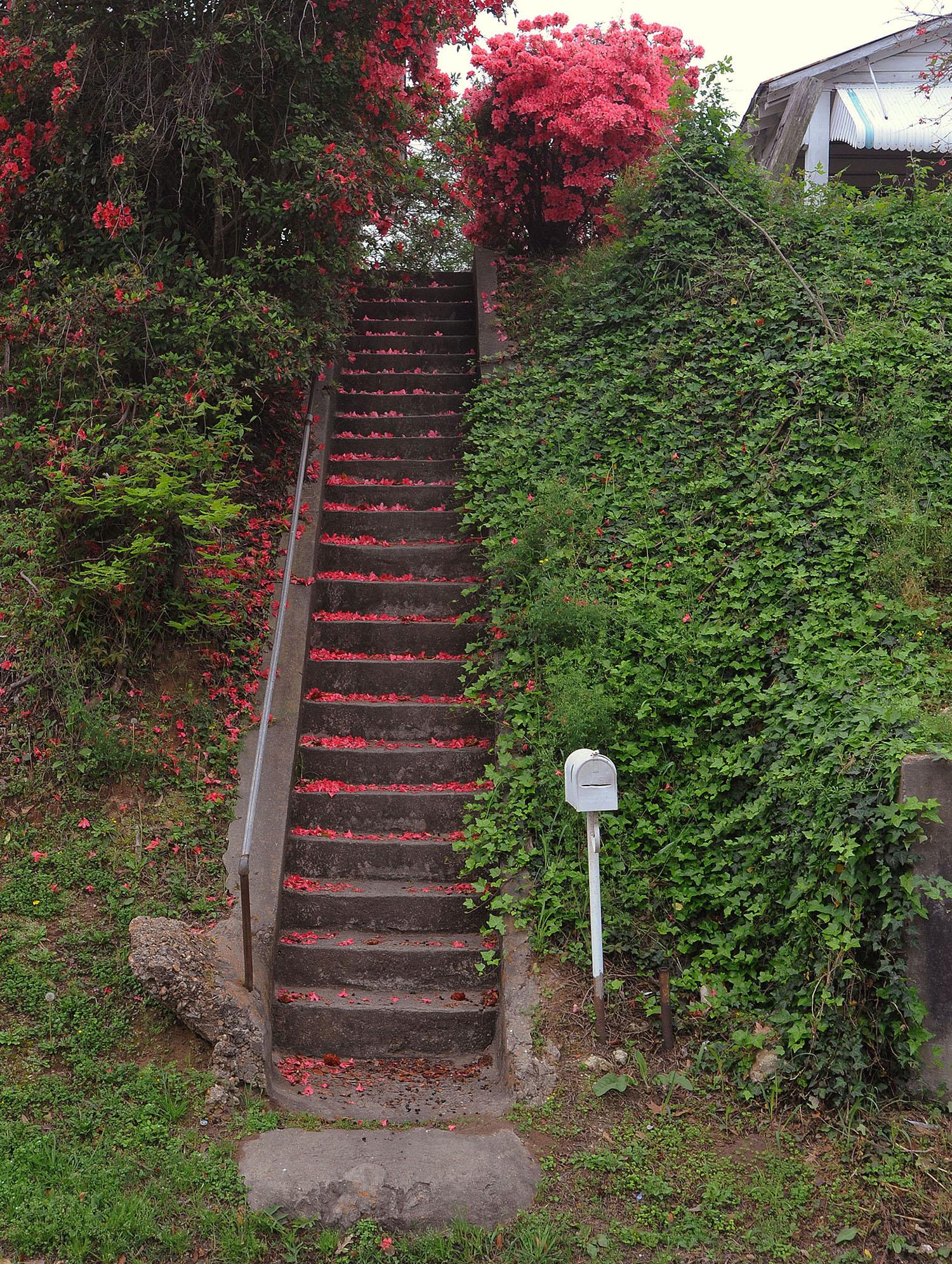 Azaleas-stair.jpg