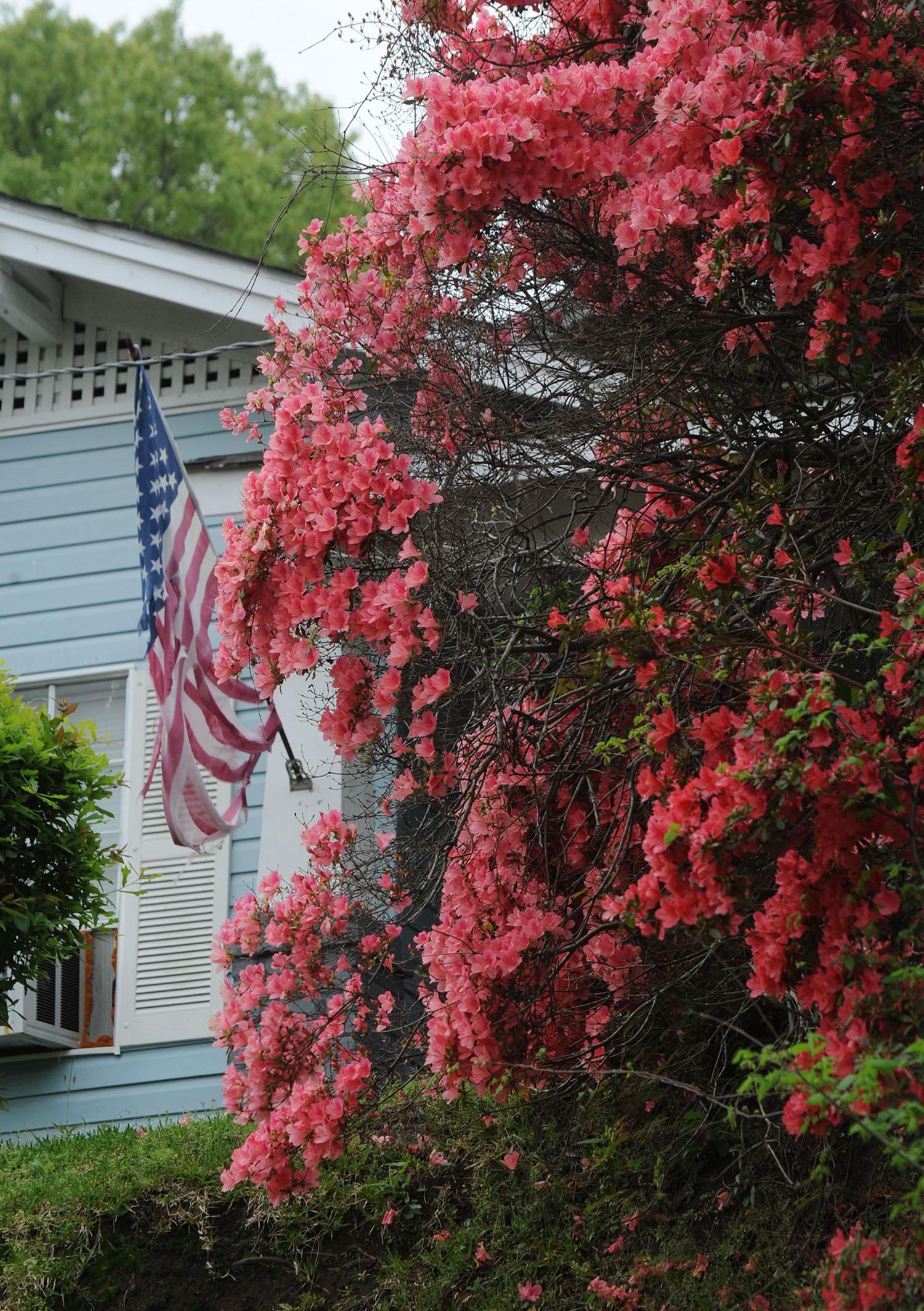 Azaleas-flag.jpg