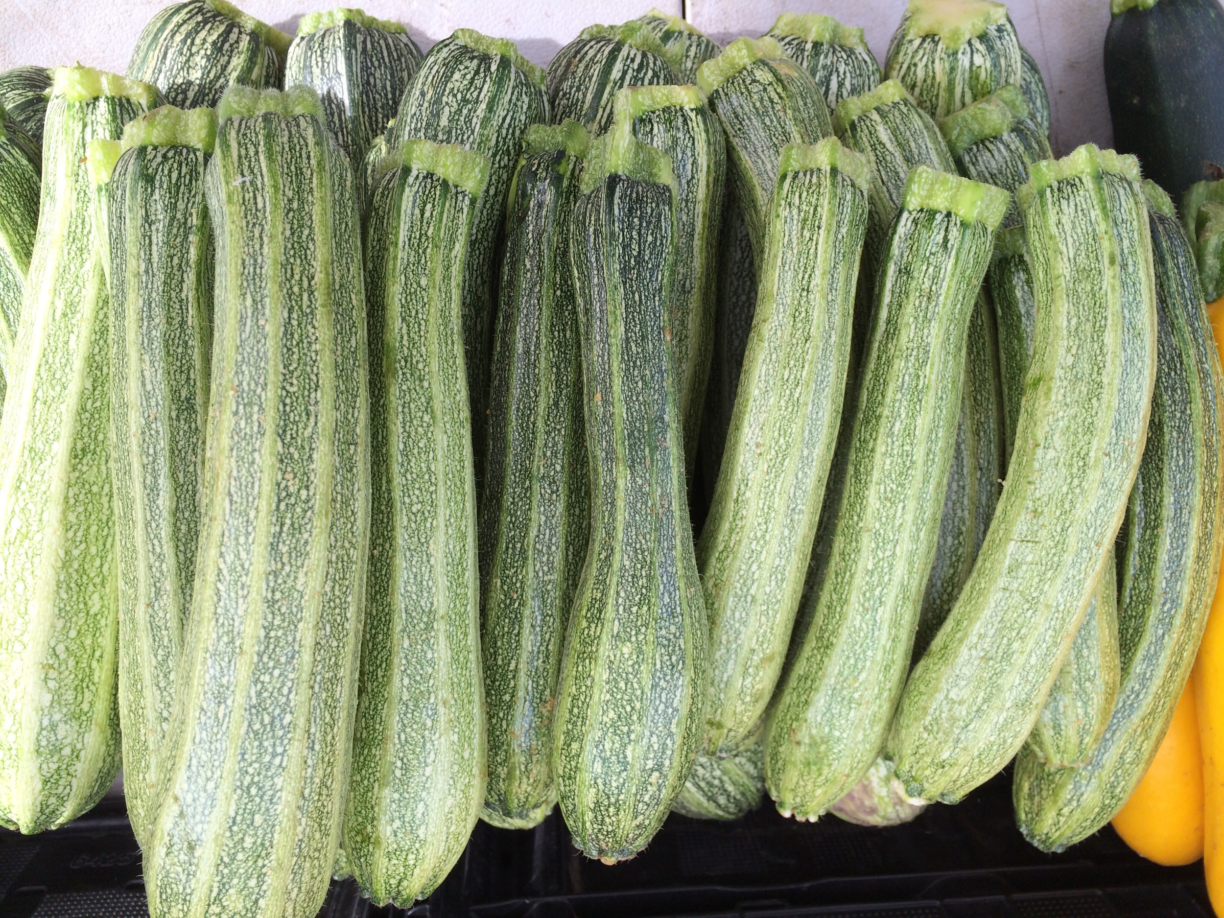 Oya Organics squash @ Mountain View farmers market.jpg