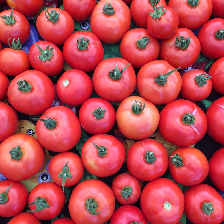 Oya Organics tomatoes.jpg