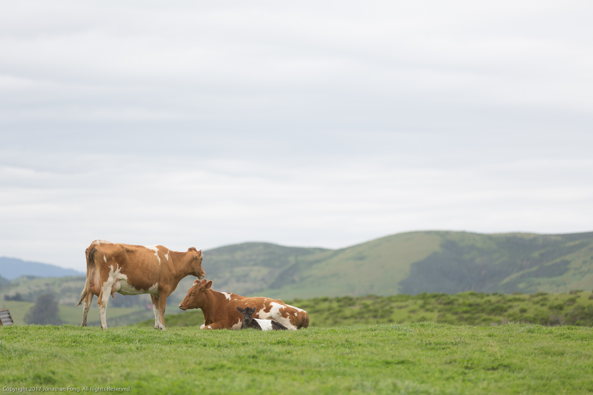 The Markegard's decisions to incorporate regenerative practices into their business and to introduce their children to stems from their shared respect for the animals both under their stewardship and those within the greater ecosystem.