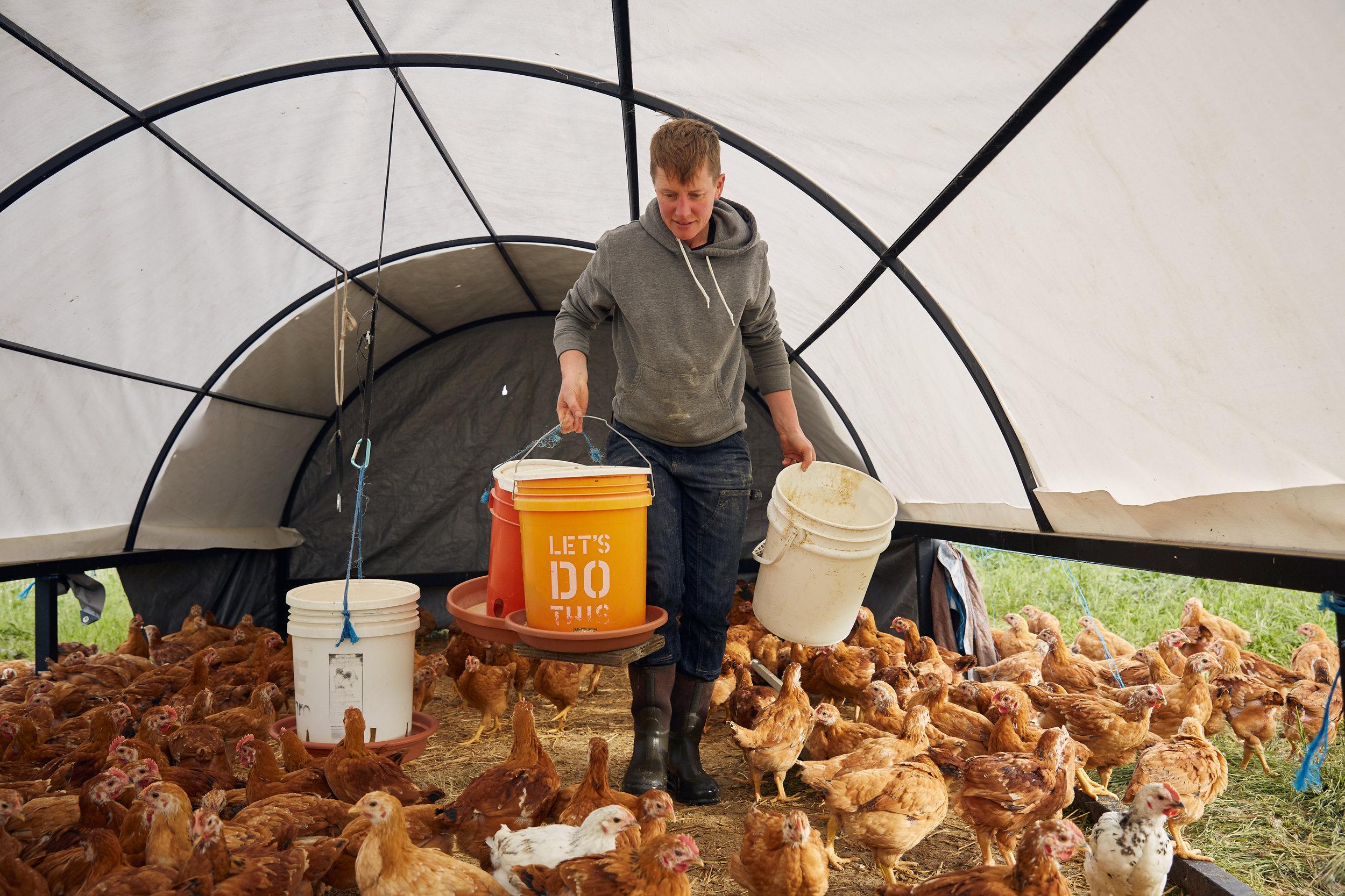 RDF_Appeal-18_7_Feed-Chickens_6.jpg