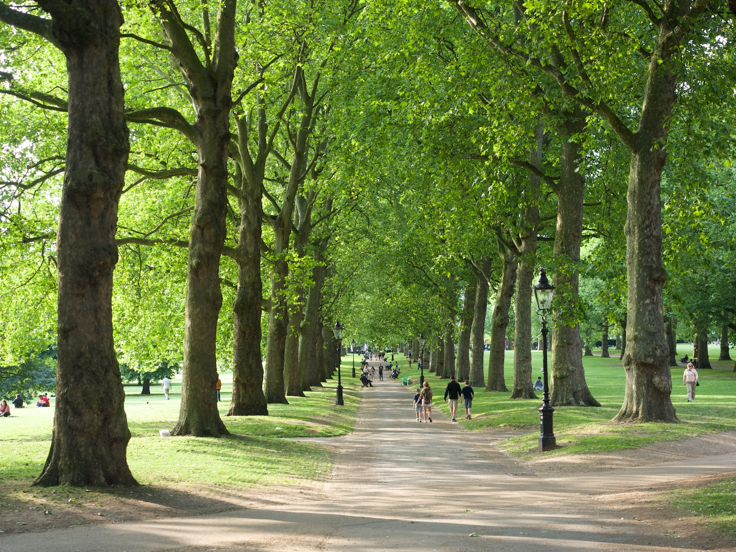 Plane trees in Green Park