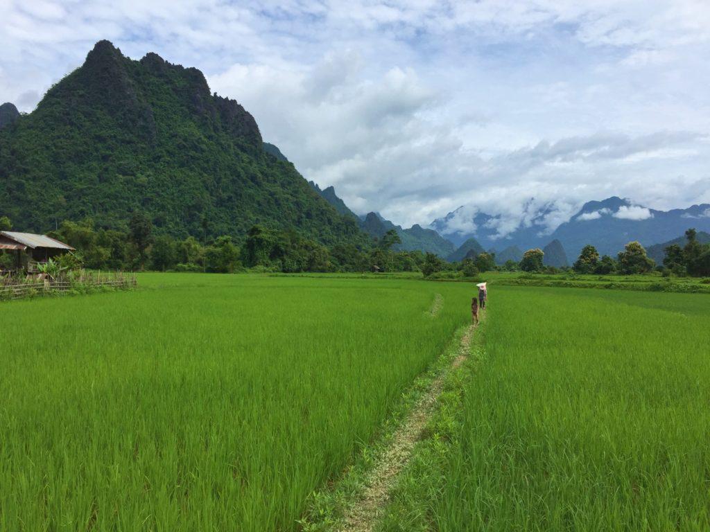 Rice paddies of Vang Vieng….more beautiful than I could have imagined.