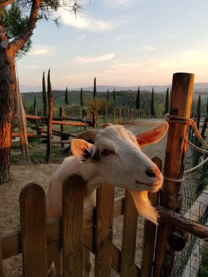 Farm life at the Agriturismo Pievesprenna