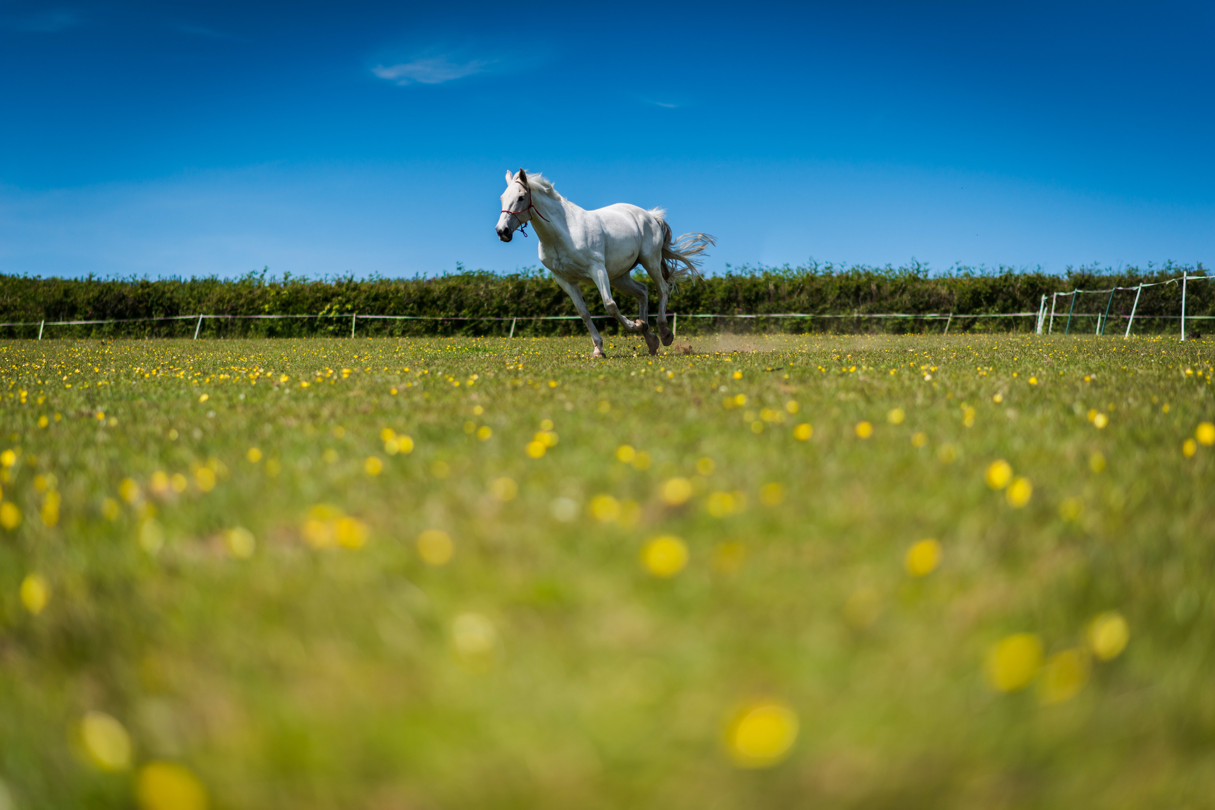 PLP_Horses_JessD_15-6.jpg