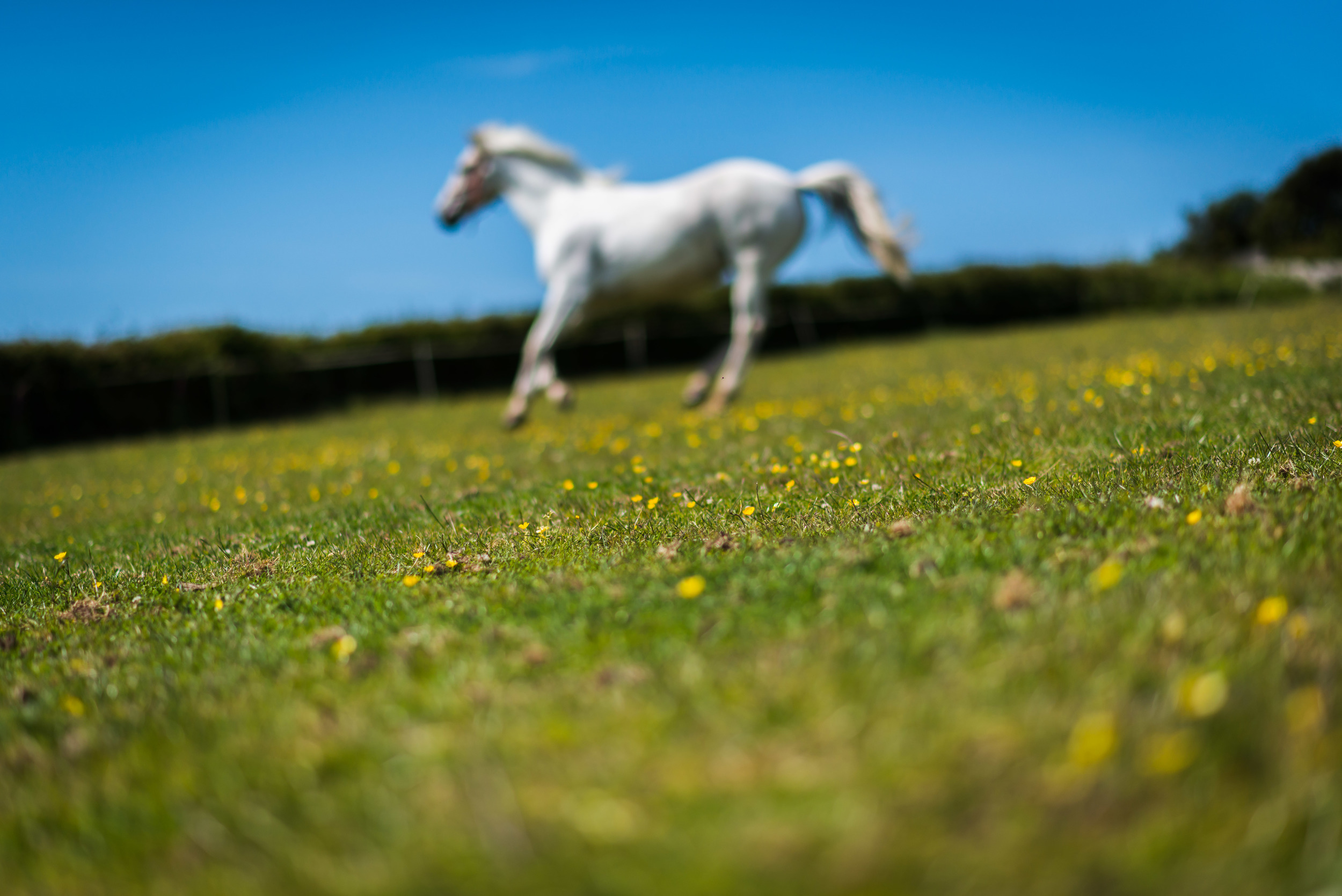 PLP_Horses_JessD_15-7.jpg