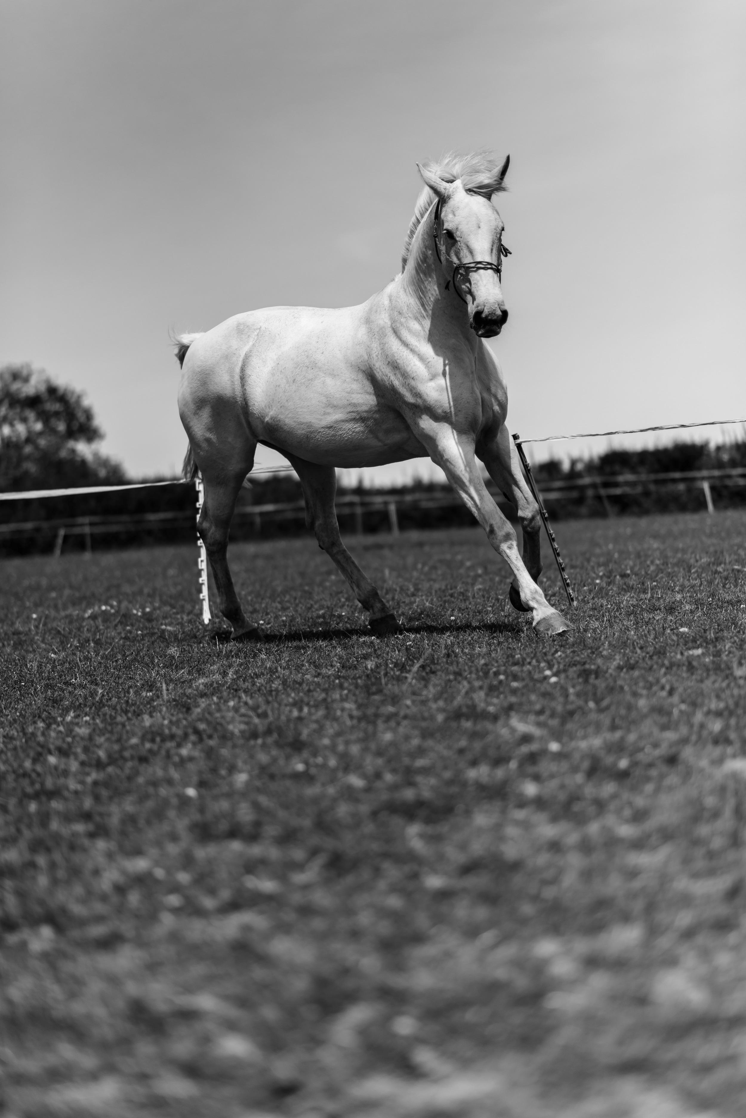 PLP_Horses_JessD_15-8.jpg