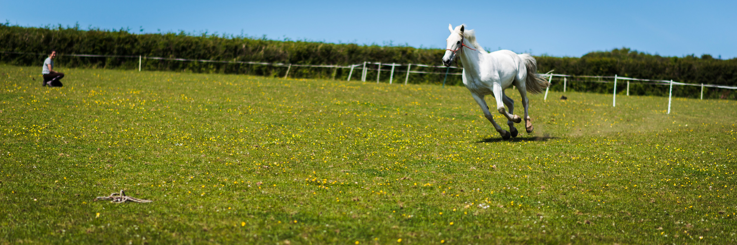 PLP_Horses_JessD_15-9.jpg