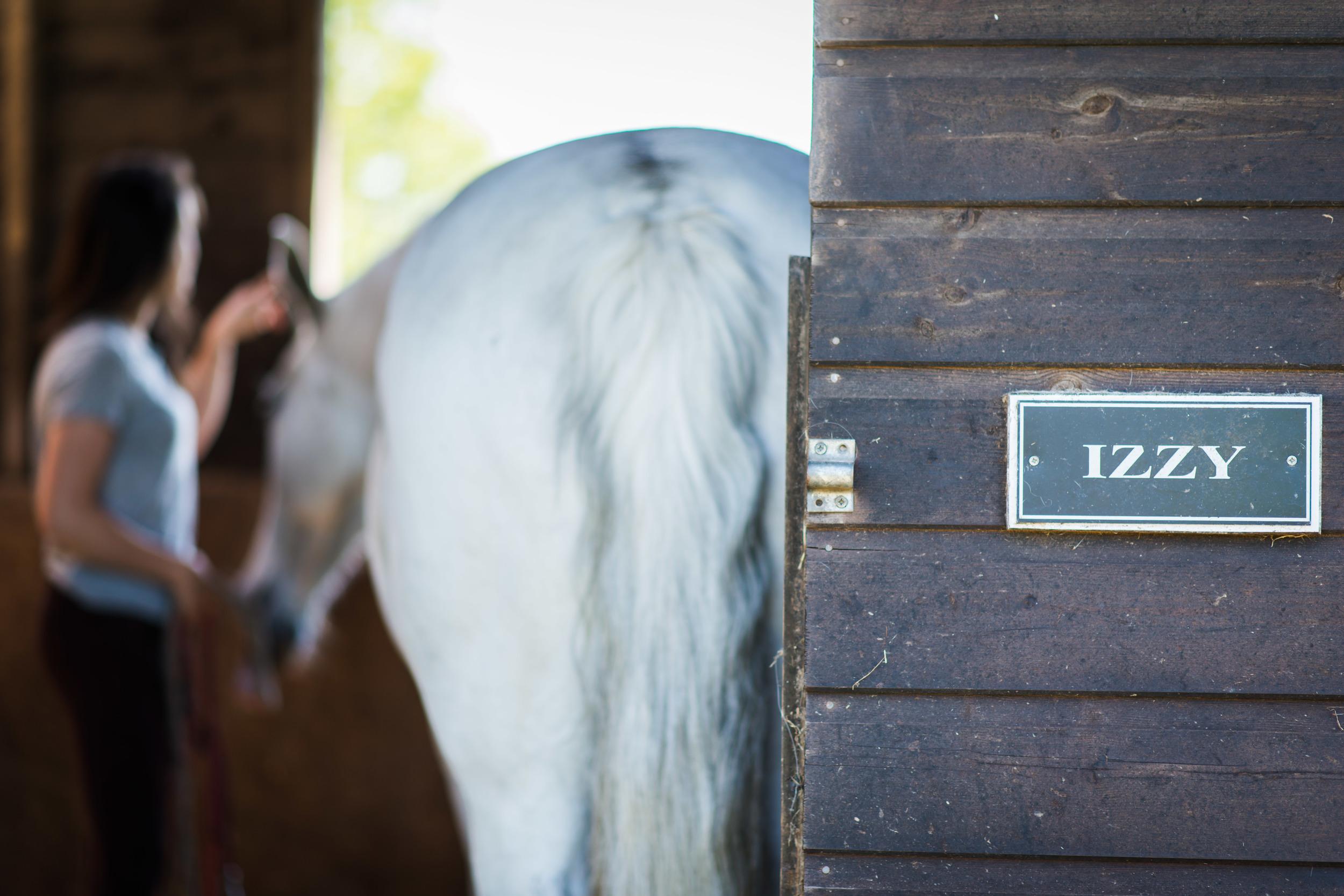 PLP_Horses_JessD_15-15.jpg