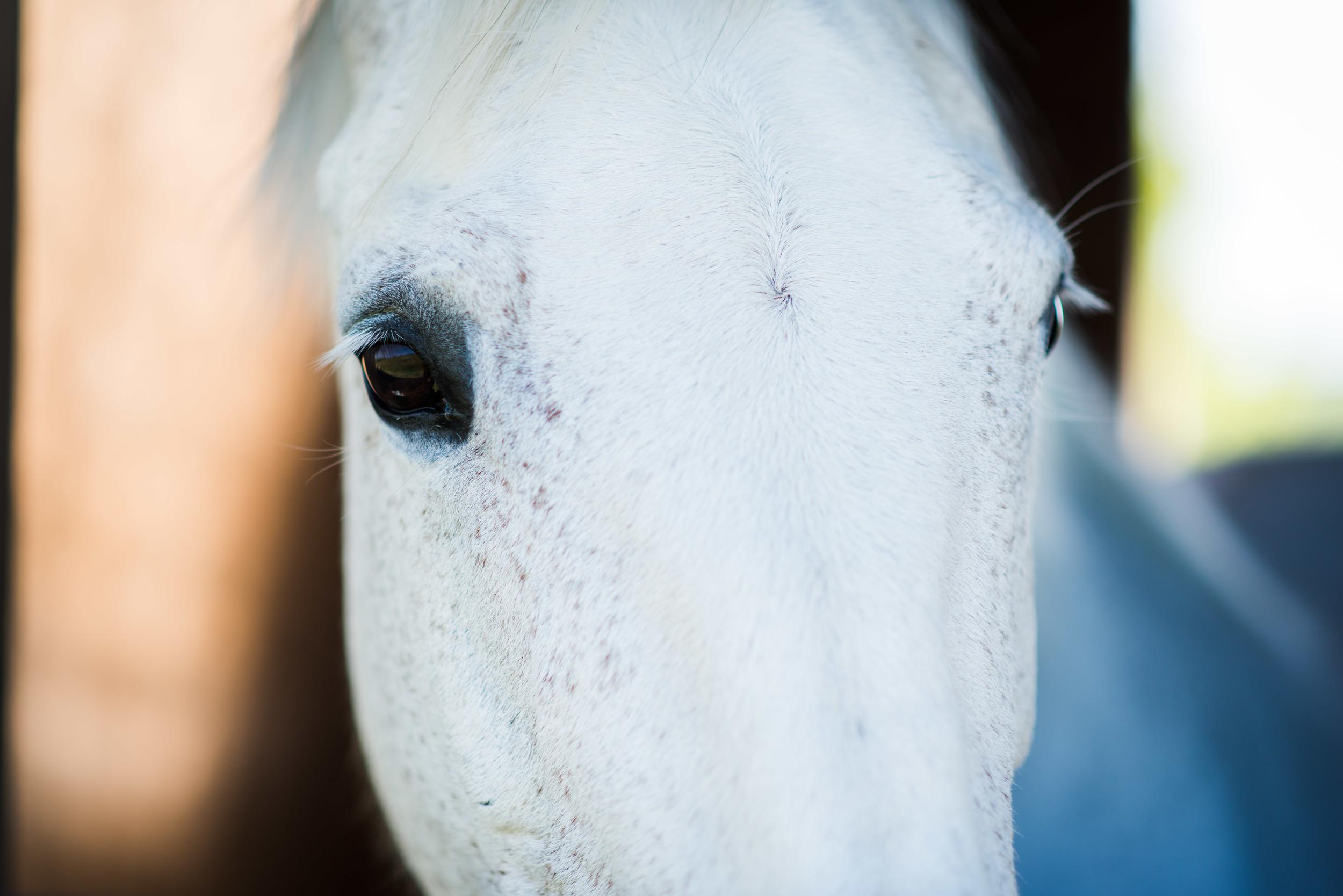 PLP_Horses_JessD_15-18.jpg