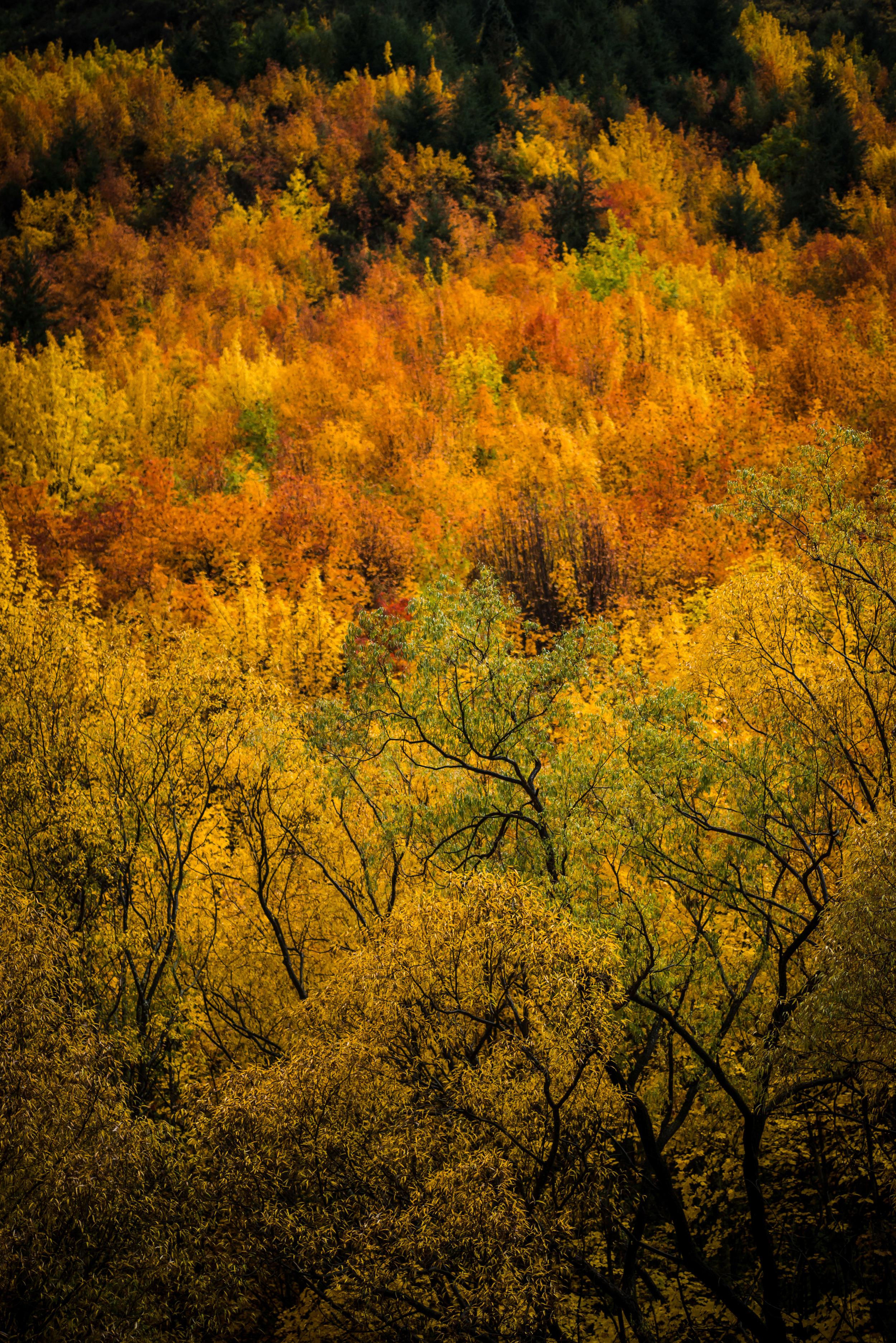 Qtown_Autumn_Leaves_15-7.jpg