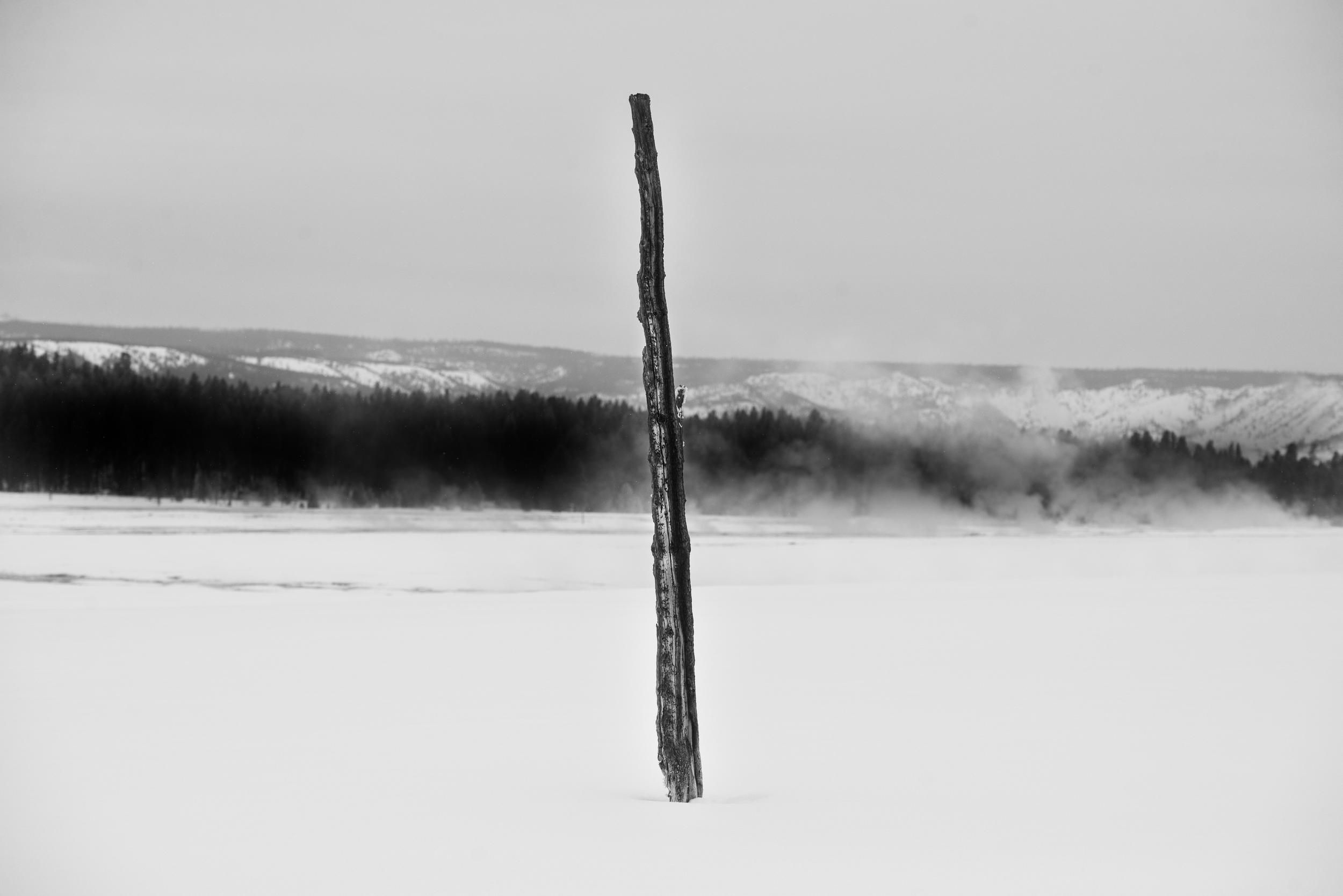 PLP_Yellowstone_2014-4.jpg