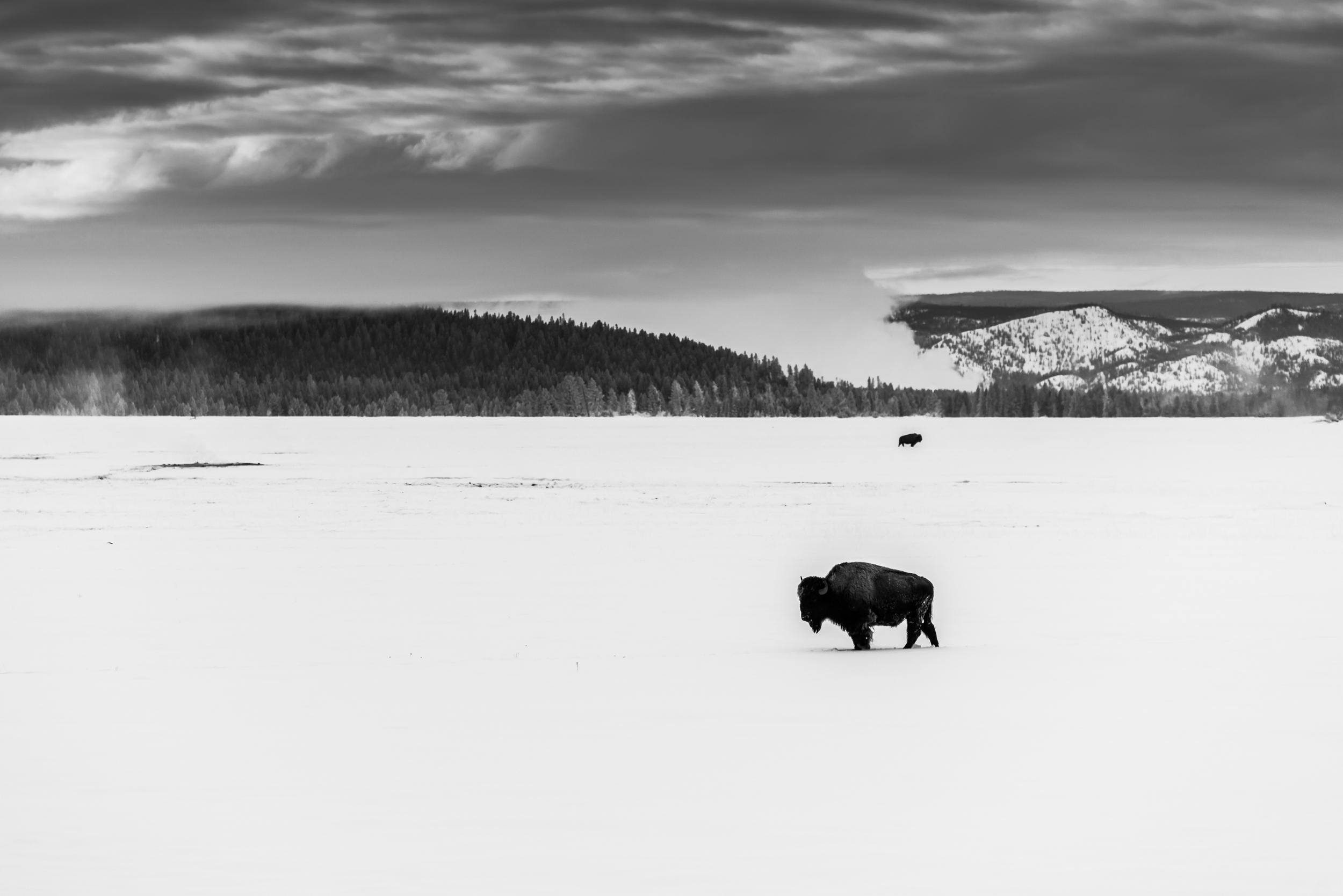 PLP_Yellowstone_2014-29.jpg