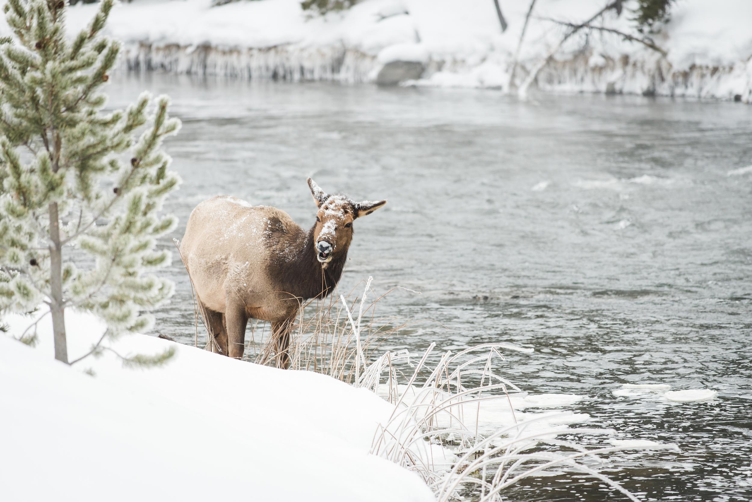 PLP_Yellowstone_2014-30.jpg