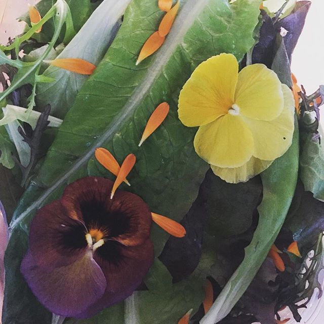A blatant plug for our other business @eatmyfarm, but gosh it makes me happy opening up a box of this deliciousness for our dinner. Surely that counts as being Naturopathic? #sorrynotsorry #organicveggies #midnorthcoastnaturopath #edibleflowers