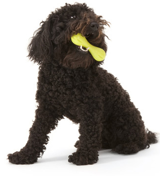 West-Paw-Design-Zogoflex™-Mini-Hurley-Dog-Toy.jpg