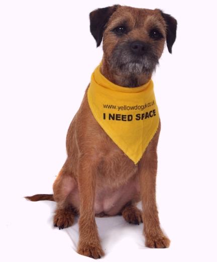 yellow dog pic.jpg