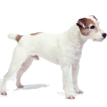 Small Dogs (to 10kg)    $21
