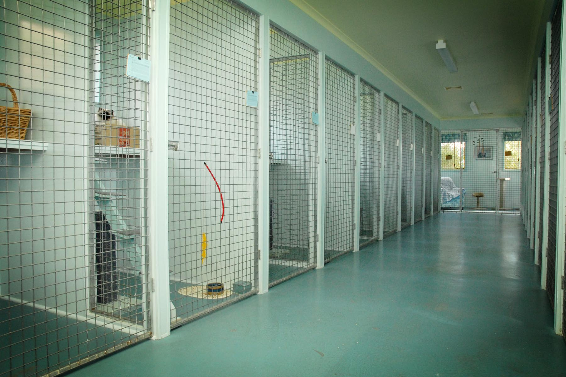 Cattery