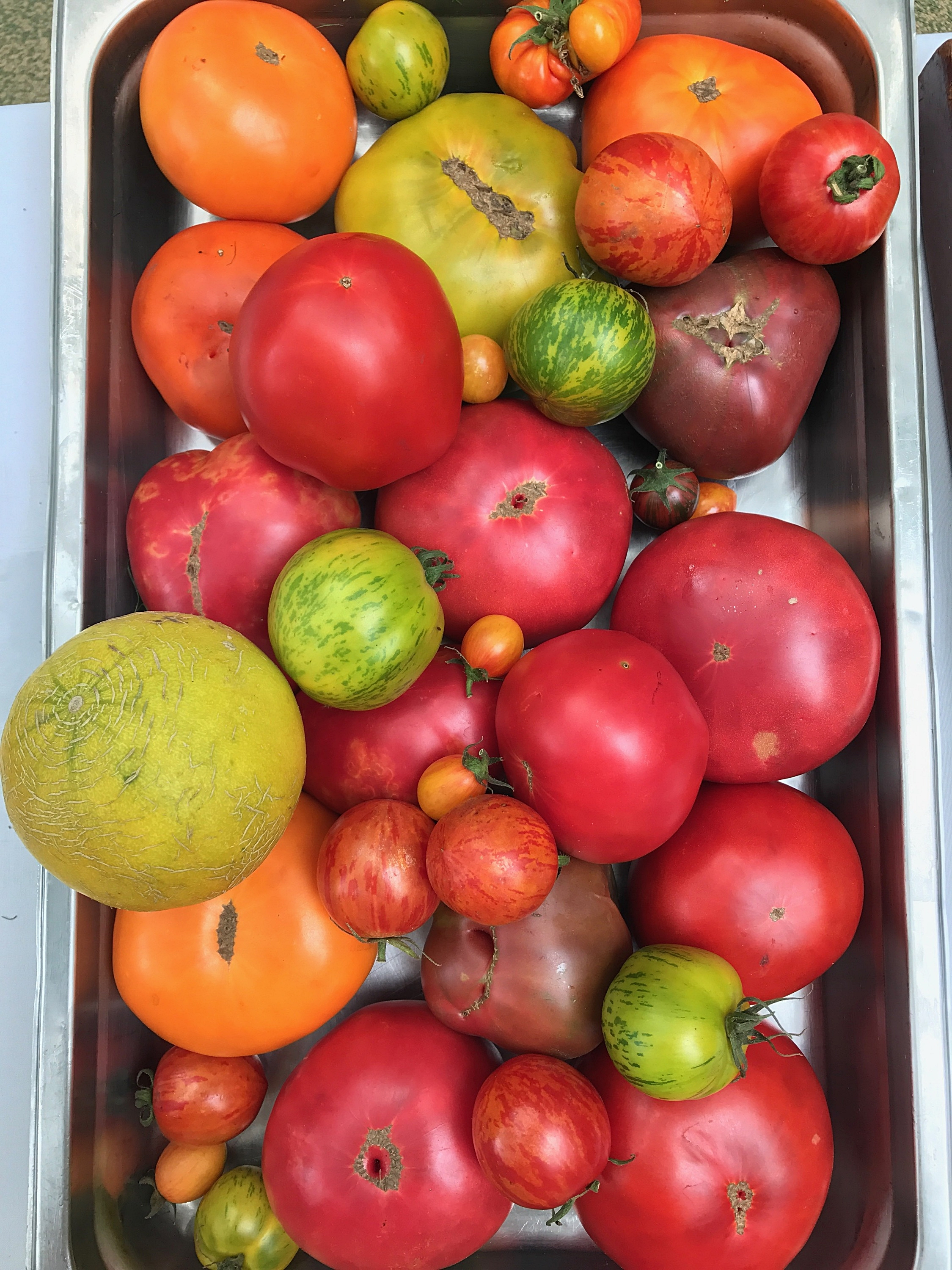 Tomatoes about to be prepped