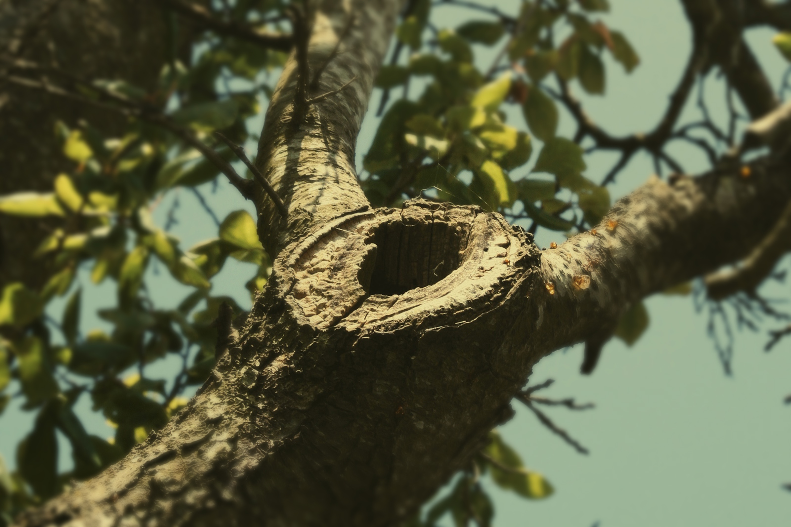 woodpecker-hole.jpg