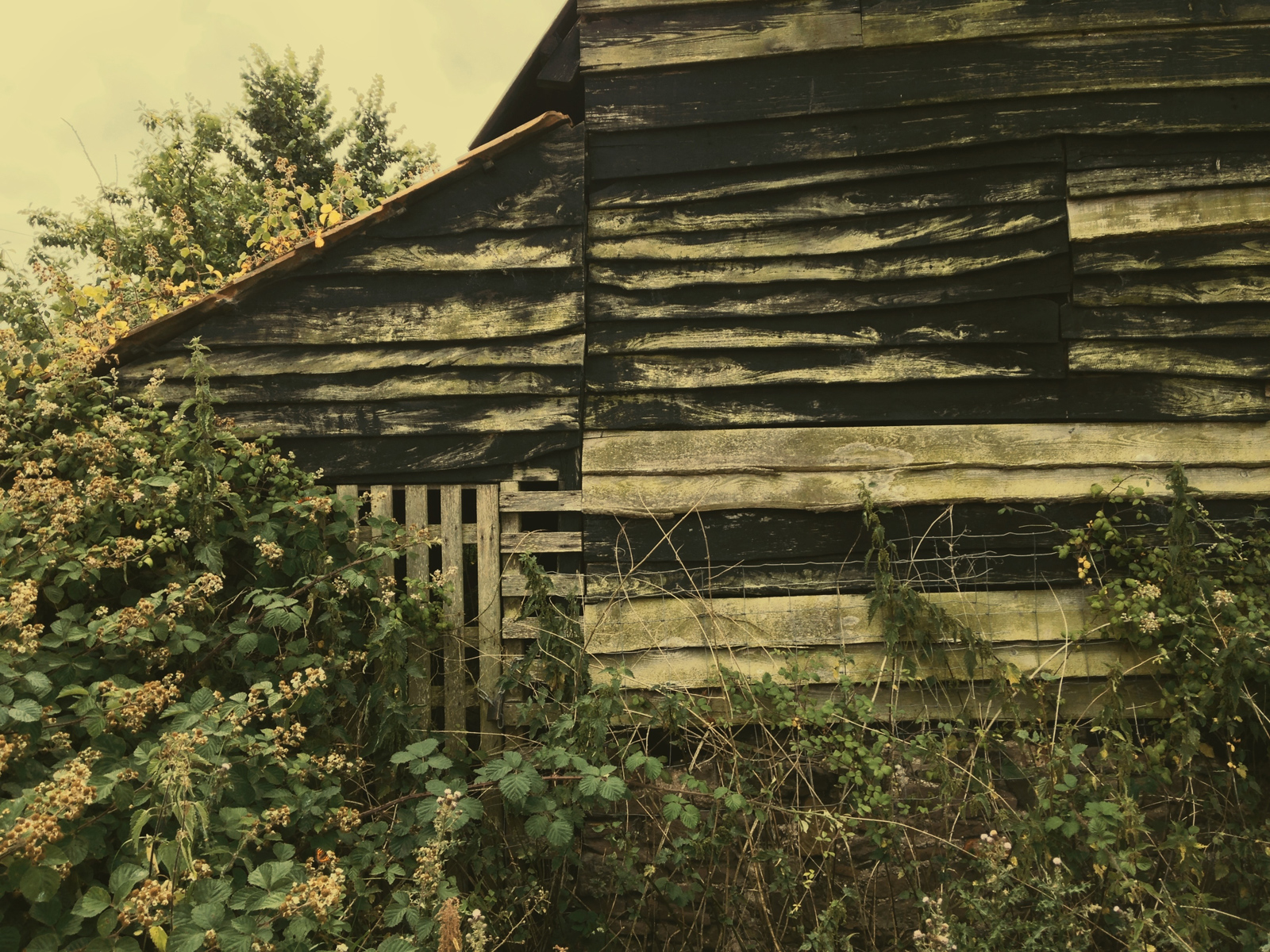 ciderhouse4.jpg